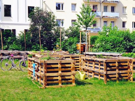 Urban Gardening im Zentrum von Bonn – der Stadtfrüchtchen Garten macht es möglich!