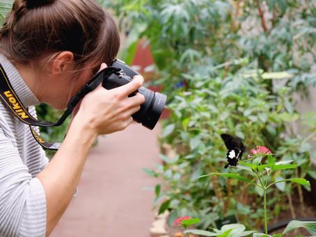 Wings of Love: Unser Besuch im Schmetterlingsgarten