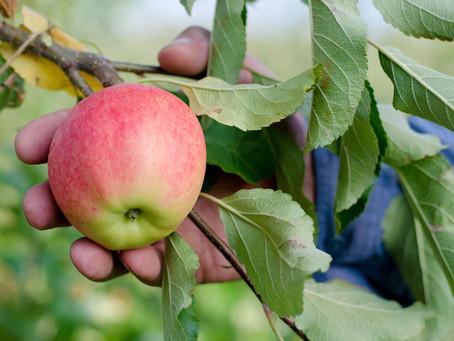 Erste SoLaWi Deutschlands mit Bio-Obst