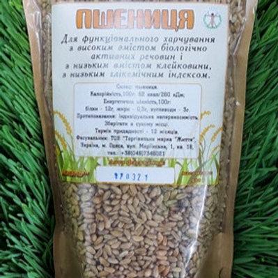 Grain of wheat of the Chernobrov variety, 500 g.