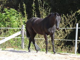 Grundlagen für eine Beziehung auf Augenhöhe mit den Pferden