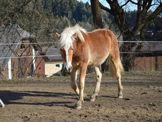 """Die """"erste"""" Begegnung mit dem Pferd"""