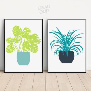 Houseplants Nature