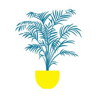 Fern Palm