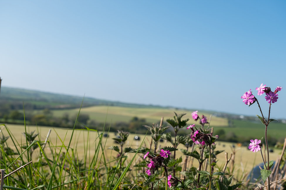 A view across rolling hills in Wales, with pink Campion flowers in the forground.