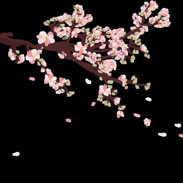 branche_sakura.png