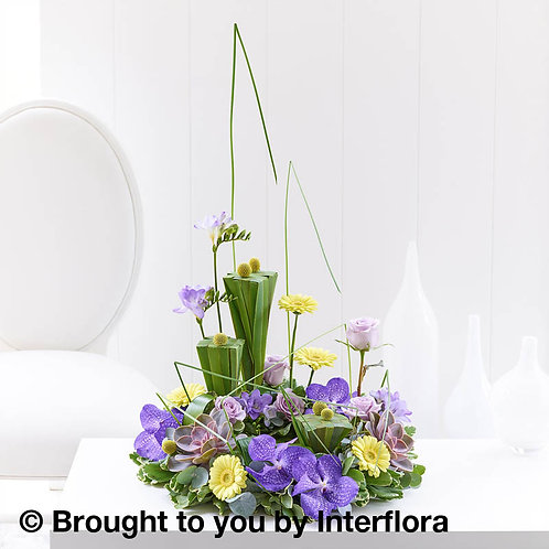 Vanda Orchid & Echevera Arrangement