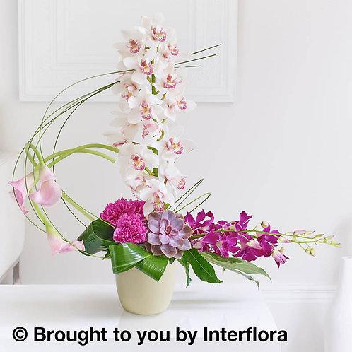 Exotic Orchid, Calla and Echevera Arrangment
