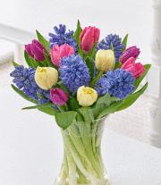 Tulip & Hyacinth Nigella