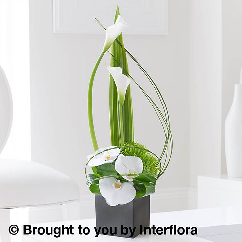 Cool Calla Lily & Orchid Swirl Arrangement