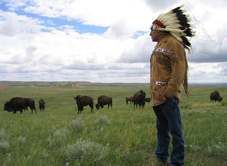 The Plains Buffalo Culture