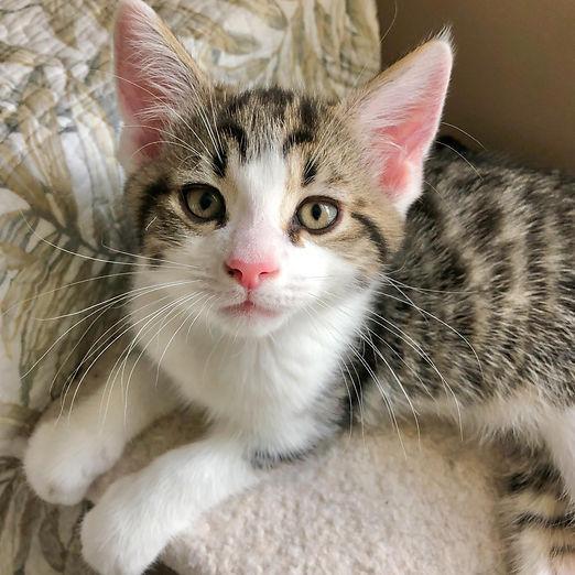 FOF, kokomo kittens, Kona IMG_4425_June 07, 2021.jpg