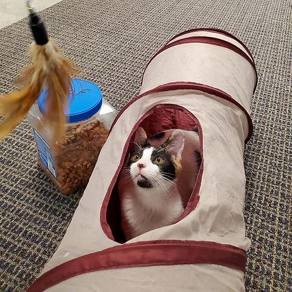 Cats, FOF, pets, Tally 20201022_135835_O