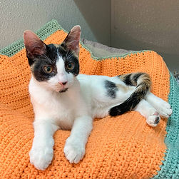 Cats, FOF, pets, Tally Photo Sep 30, 6 0