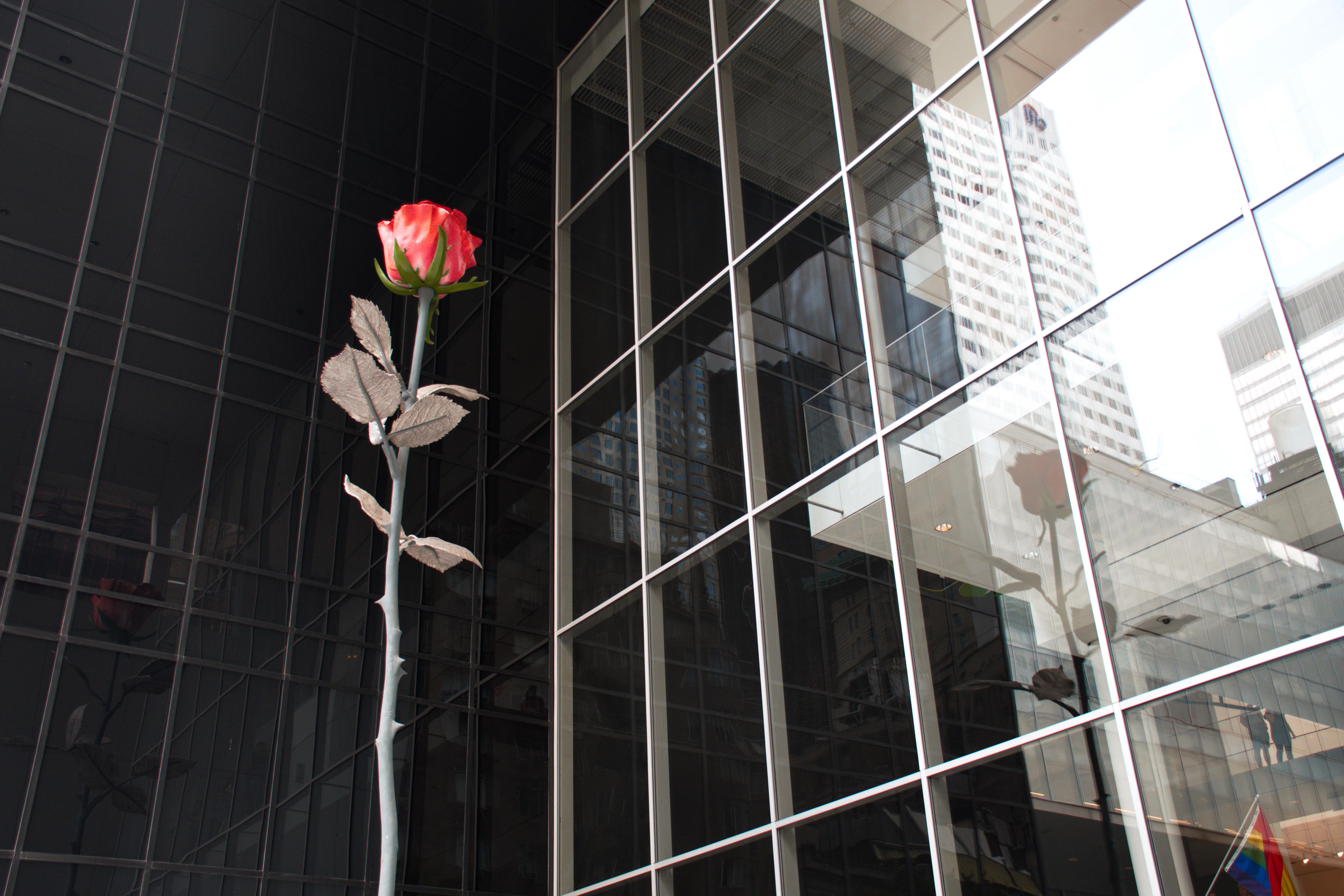 Last Of The English Roses - MOMA à NY