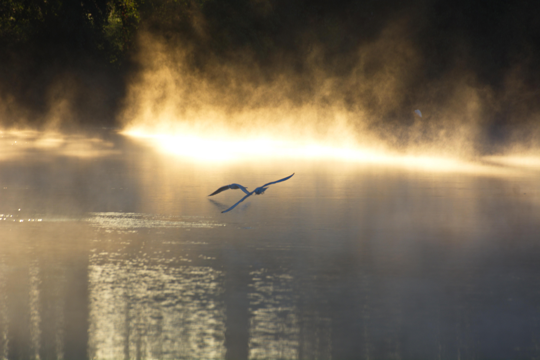 Poétique du battement d'ailes