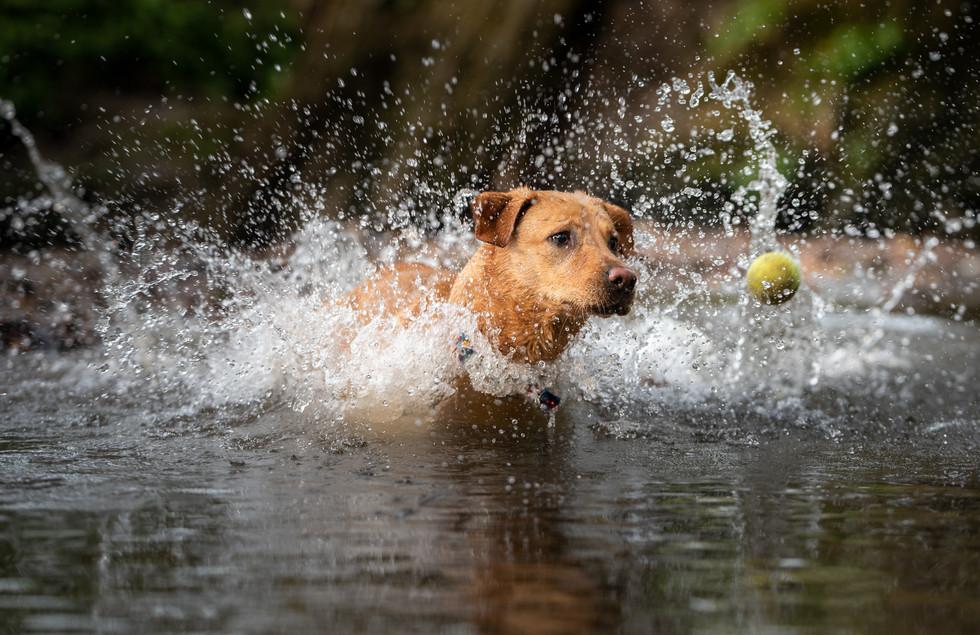 Dog in river.jpg