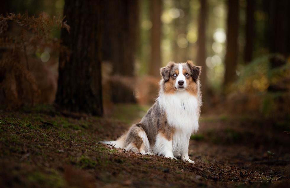Dog in woodland.jpg