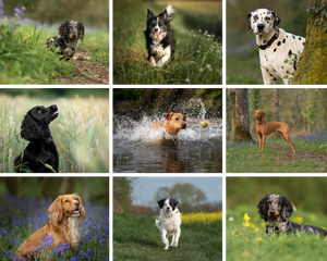 Photographs of dogs playing outdoors, by Somerset pet photographer Sarah Gibson