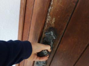 ¡La puerta real del Santuario Original se encuentra en la Casa de Alianza!