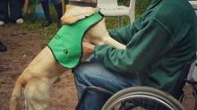 Trener psów czy trener opiekunów? (część 1)