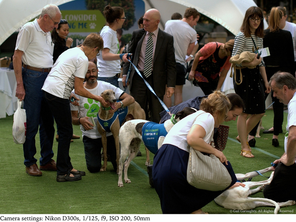 Greyhounds bring city folk to their knees