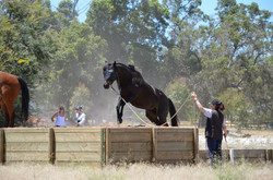 Horse riding and horseplay Obstacles