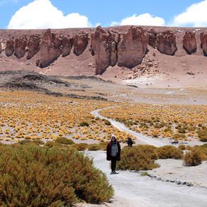Deserto do Atacama - Salar de Tara
