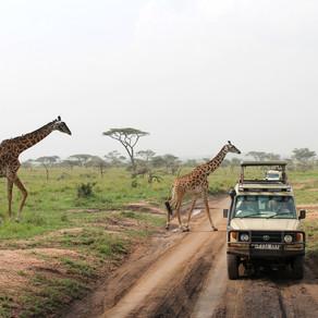 Safári na Tanzânia