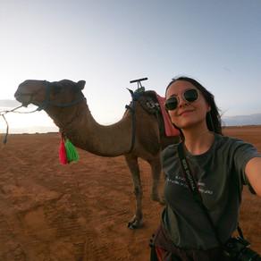 Andar de camelo no Marrocos e turismo animal
