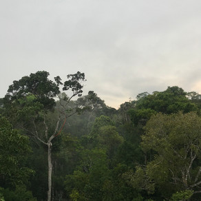 Amazônia - Roteiro, Gastos e Dicas
