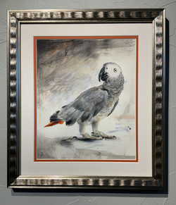 Untitled (African Grey Parrot)