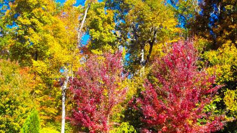 IMG_0676.jpgred leaves 1