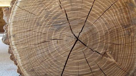 cut tree 1
