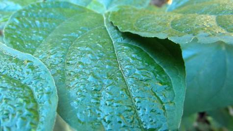 wet leaves 2