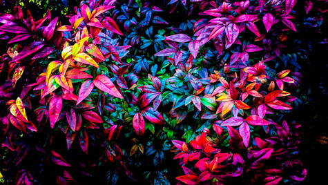 colorful leaves 3