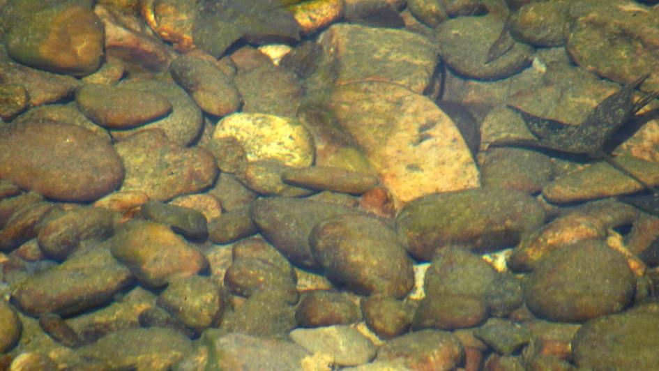 water rocks 1