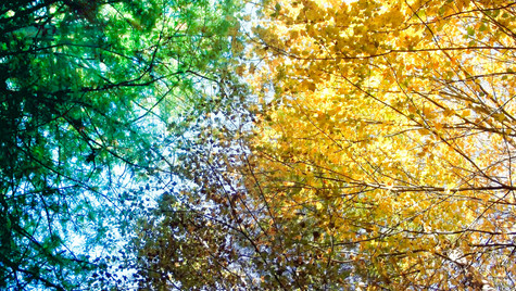 colorful trees 2