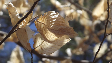 dry leaves 1