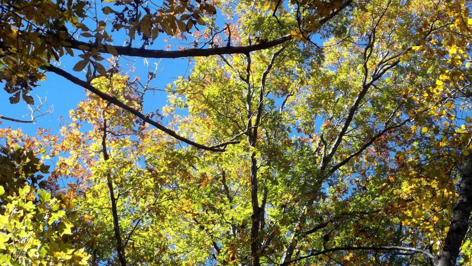 green trees blue sky