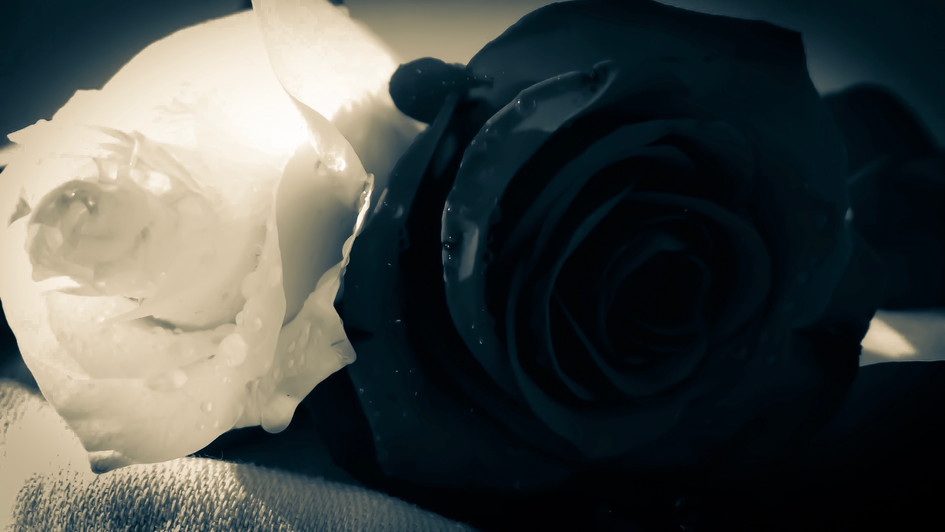 white black rose