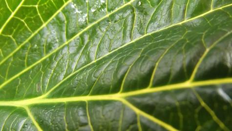 leaf 2