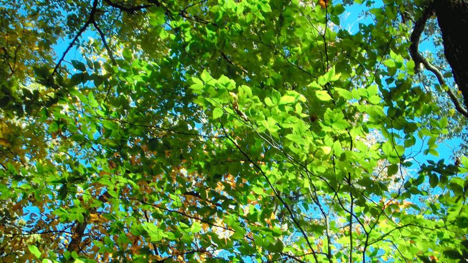 green trees blue sky 2