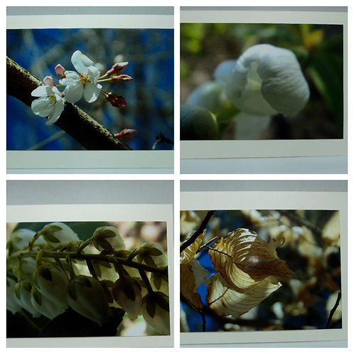 Flower photo cards 4 pack