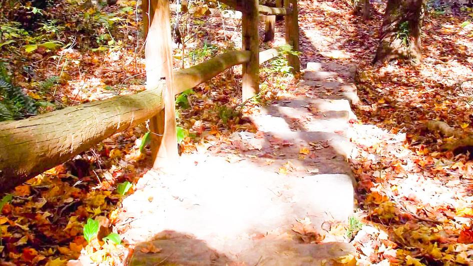 leaf path 1