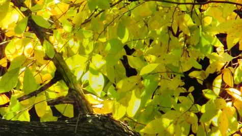 light greeen leaves 2