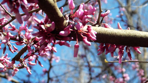 pink small blossoms