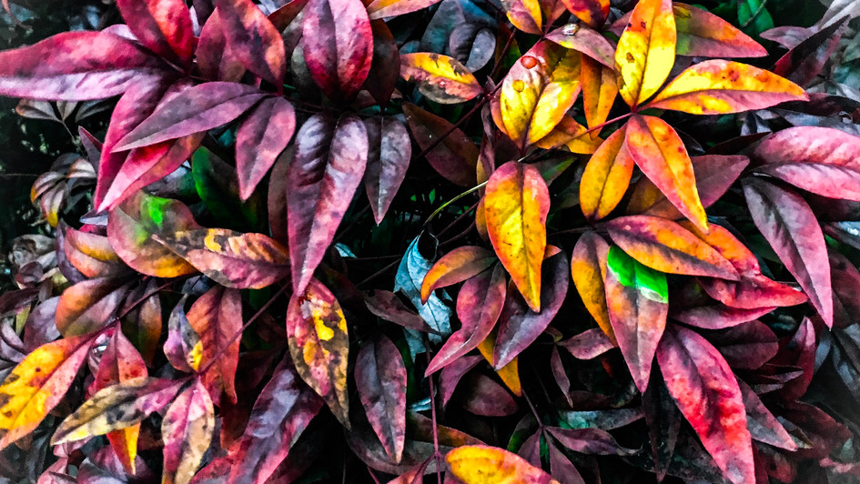 colorful leaves 4