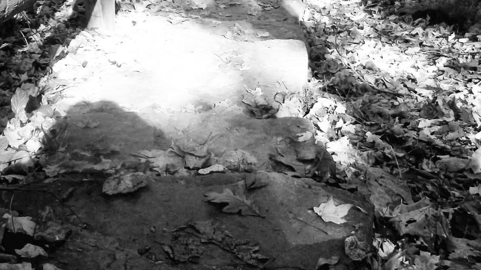 leaf path B&W