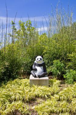 Panda Bear, Meijer Gardens, June 2020